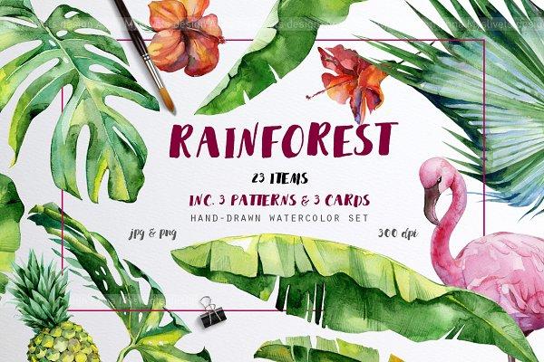 Rainforest tropical set