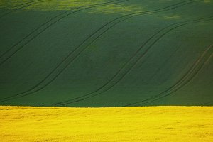 Colorful summer fields