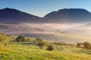 Morning mist over meadow
