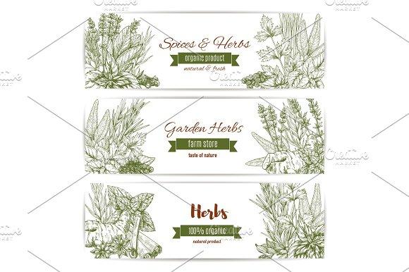 Herbs Spices And Leaf Vegetables Sketch Banner