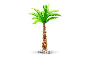 Tropical coconut palm tree with green