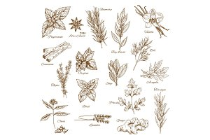 Herbs, spices and leaf vegetable sketch poster