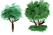 Watercolor trees. vector+jpg