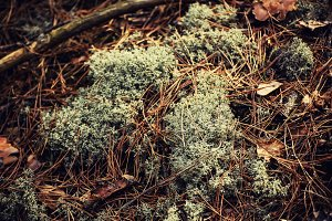 Abstract moss background