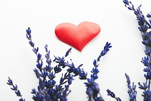 Red heart next to lavender flower on white background. Isolated.