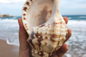 Hand holding a sea shell