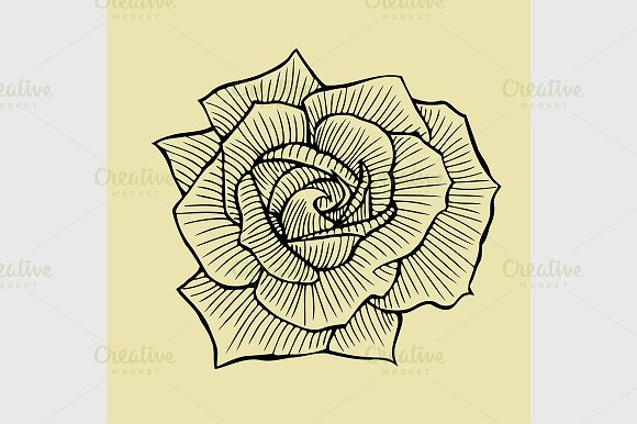 Hand Drawn Rose Graphics Creative Market
