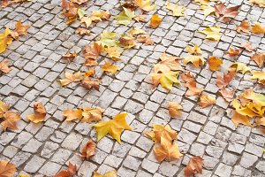 Old brick steps with autumn leaves