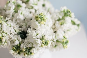 Beautiful White Hyacinths