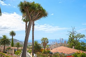 Landscape of Tenerife