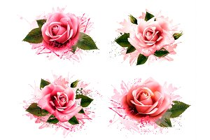 Set of pink roses.