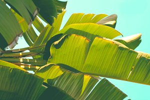 Palm Tree Leaves Horizontal
