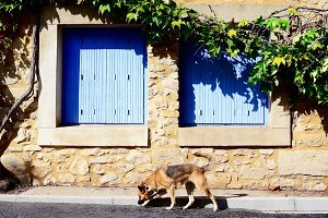 Dog in south of France