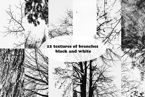of branches black and white