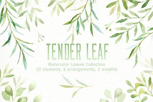 Tender Leaf Watercolor clipart
