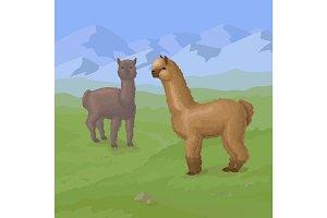 Alpaca on the mountain background