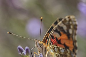 Butterfly in close up