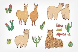 Cute lama, alpaca and cactuses