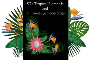 Tropical Elements Set