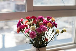 Indoor flower on the windowsill. white vase, pot. curtains, tulle