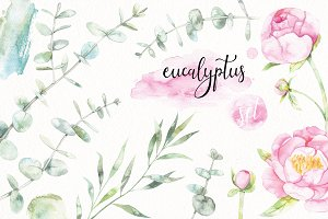 Watercolor eucalyptus set
