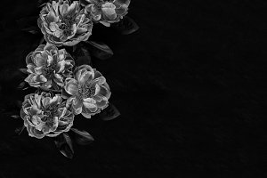 Floral Stock Photo | Black &  White