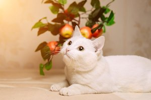 Portrait of white domestic cat lying