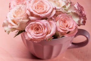 Pink roses in pot