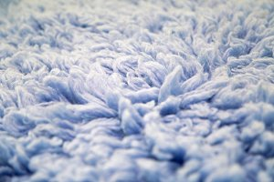 blue large long fur
