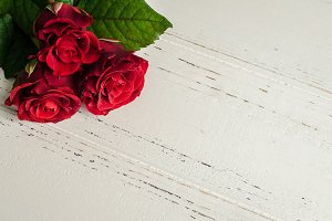 Red rose flowers on white shabby chic background