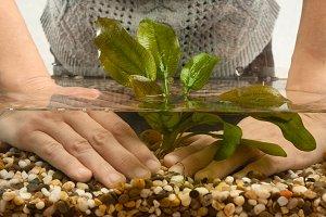 hands planting plant in aquarium