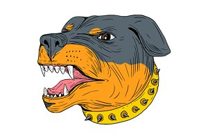 Rottweiler Guard Dog Head