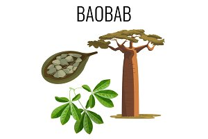 African baobab tree and fruit with seeds color icon emblem