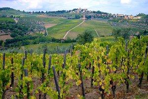 Vineyards and Vines