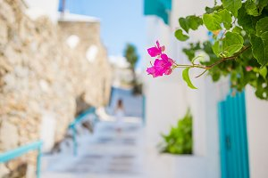 The narrow streets of greek island with flowers. Beautiful architecture building exterior with cycladic style.