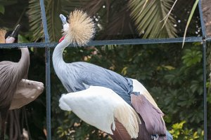 largest tropical bird
