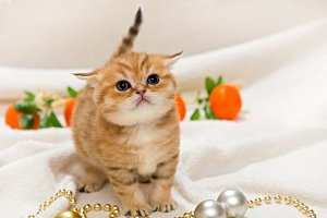 Small kitten and Christmas toys