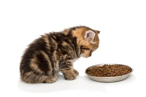 Little kitty and dry food