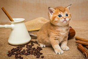 Little kitten  and coffee