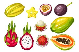 Exotic tropical fruits set. Illustration of asian plants