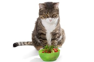 cat and the bowl of fresh salad