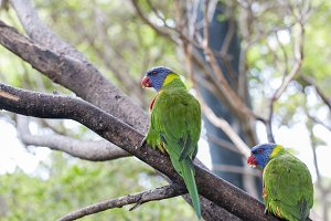 parrots in their jungle