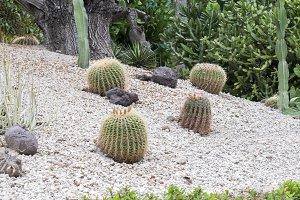 cactus planted