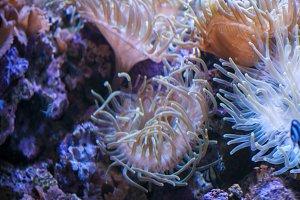 coral colors