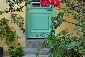 House Bougainvillea Flowers