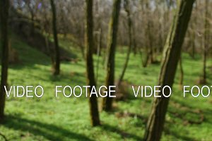 spring sunny forest without leaves and with green grass. smooth camera movement