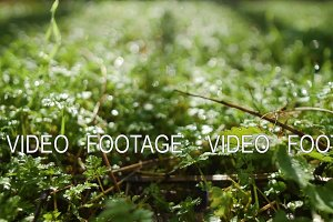 Smooth movement of camera close up on green grass with dew in meadow