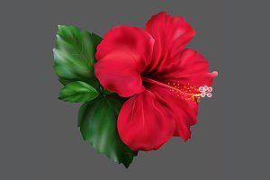 Red hibiscus flower isolated vector