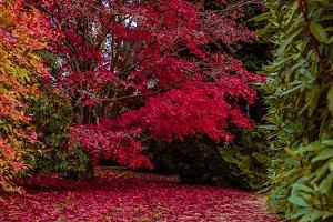 Autumn scenary