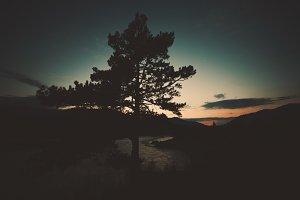 Pine tree on sunset